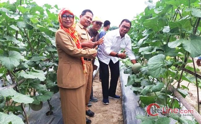 Bupati Rohil Kagum Lihat Semangat Petani Holtikultura di Kepenghuluan Sungai Sialang