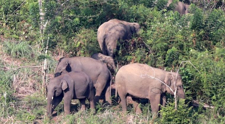 Karhutla Di Taman Nasional Tesso Nilo Petugas Evakuasi Gajah