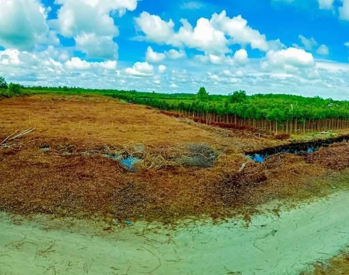 Kami Hadir Tidak Hanya Kata, Berbuat Nyata, Pohon Gerunggang Sebagai Alat, Menuju Riau Hijau