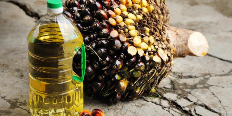 Eropa Akui Kualitas Minyak Sawit Indonesia Paling Baik di Dunia