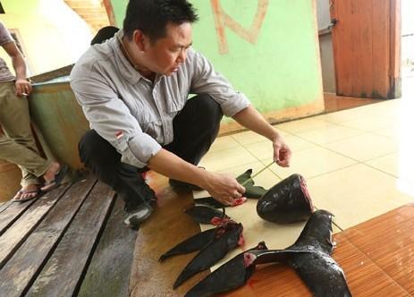 Lima Pesut Mati di Riau Dalam Tiga Tahun