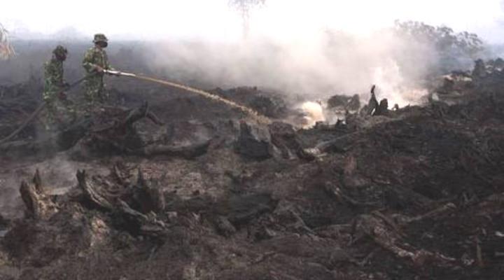 100 Hektar Lahan di Kepulauan Meranti Kembali Sumbang Asap