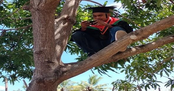 Wisuda Daring di Atas Pohon akibat Sulitnya Sinyal Internet
