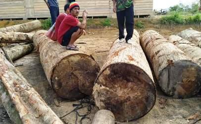 Hutan Kami Dibabat Habis, Kuasa Hukum Warga: Tolong Kami Pak Kapolri!