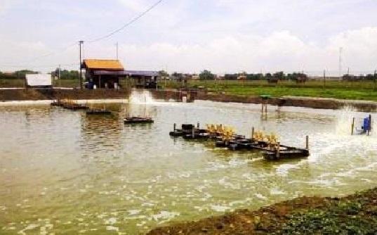Kadis DPMPTSP Padang Pariaman Benarkan Tambak Udang Tanpa AMDAL Sengaja Dibiarkan