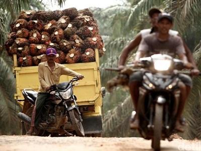 Lahan Kebun Sawit PTPN V Riau akan Dieksekusi