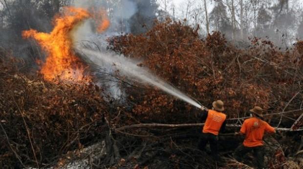 Polres Pelalawan Selidiki Penyebab Kebakaran Lahaan