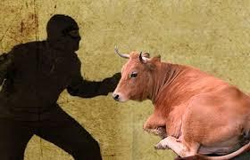 Polisi Gulung Komplotan Pencuri Ternak di Rohul dan Kampar