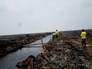 20.790 Buruh Industri Kehutanan Terancam PHK