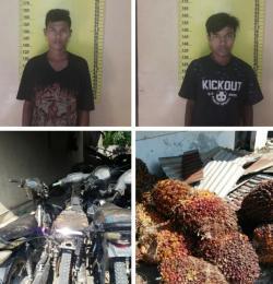Polsek Bagan Sinembah Jebloskan Dua Pelaku Pencuri 18 Tandan Sawit Milik PT. SIP
