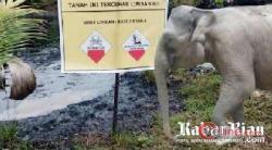 """""""Kutukan"""" Pada Pembuang Limbah Chevron Terus Mengalir, """"PT CPI Tolong Bersihkan TTM Mu"""""""