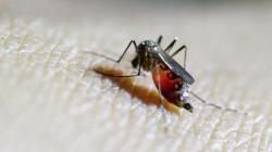IAEA Sarankan Gunakan Teknologi Nuklir Untuk Pembasmian Nyamuk Malaria