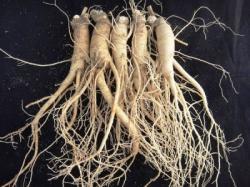 Riset Klinis MFDS Korea Akui Ginseng Korea Layak Sebagai Makanan Fungsional untuk Kesehatan Tulang