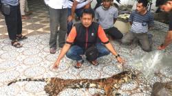 Jaringan Perdagangan Organ Hewan Polda Riau Berhasil Menangkap Pelakunya