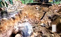 Dalam Kawasan PT Arara Abadi Gajah Ditemukan Sudah Membusuk