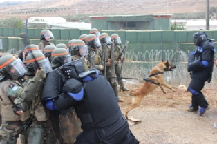 Personel Garuda Indobatt Latihan Anti Huru Hara Bersama Tentara Perancis