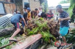 Akibat Hujan Lebat, 4 Rumah Tertimpah Pohon Sawit