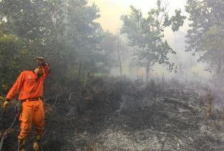 Riau Perpanjang Status Siaga Karhutla