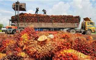 20 Persen Ekspor CPO Indonesia ke Belanda Terancam