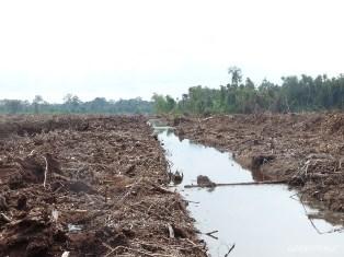 Apindo Riau Tolak Penerapan Regulasi Gambut KLHK